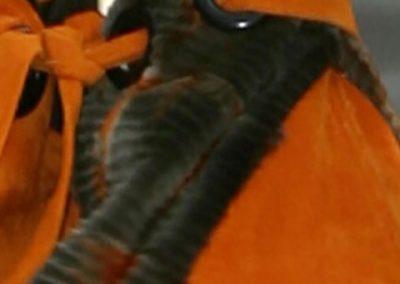 MOcongres ede2008c